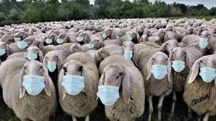 Брэдли Любящий -  ПРОСВЕЧИВАЮЩЕЕСЯ ЧЕЛОВЕЧЕСТВО  – (ВАЖНЫЙ РЕПОСТ) Sheep-Two